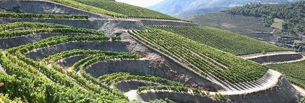 winnica Fonseca, Dolina Douro